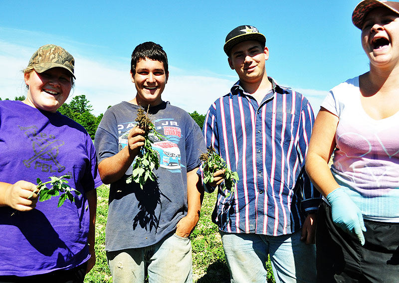 The Harvesting Crew