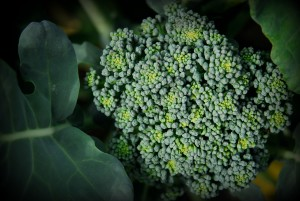 brocoli-edited