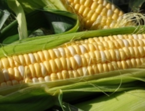 Why Certified Organic Sweet Corn Costs More!