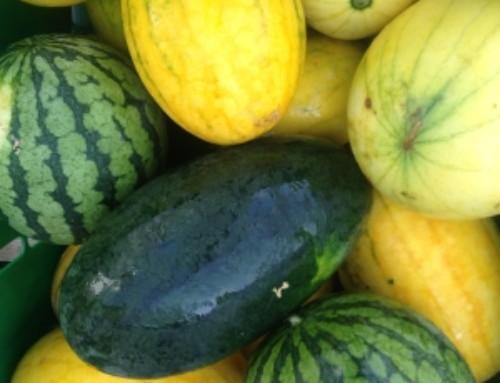 It's Melon Season!