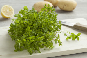 Heap of fresh green chickweed on a cutting board